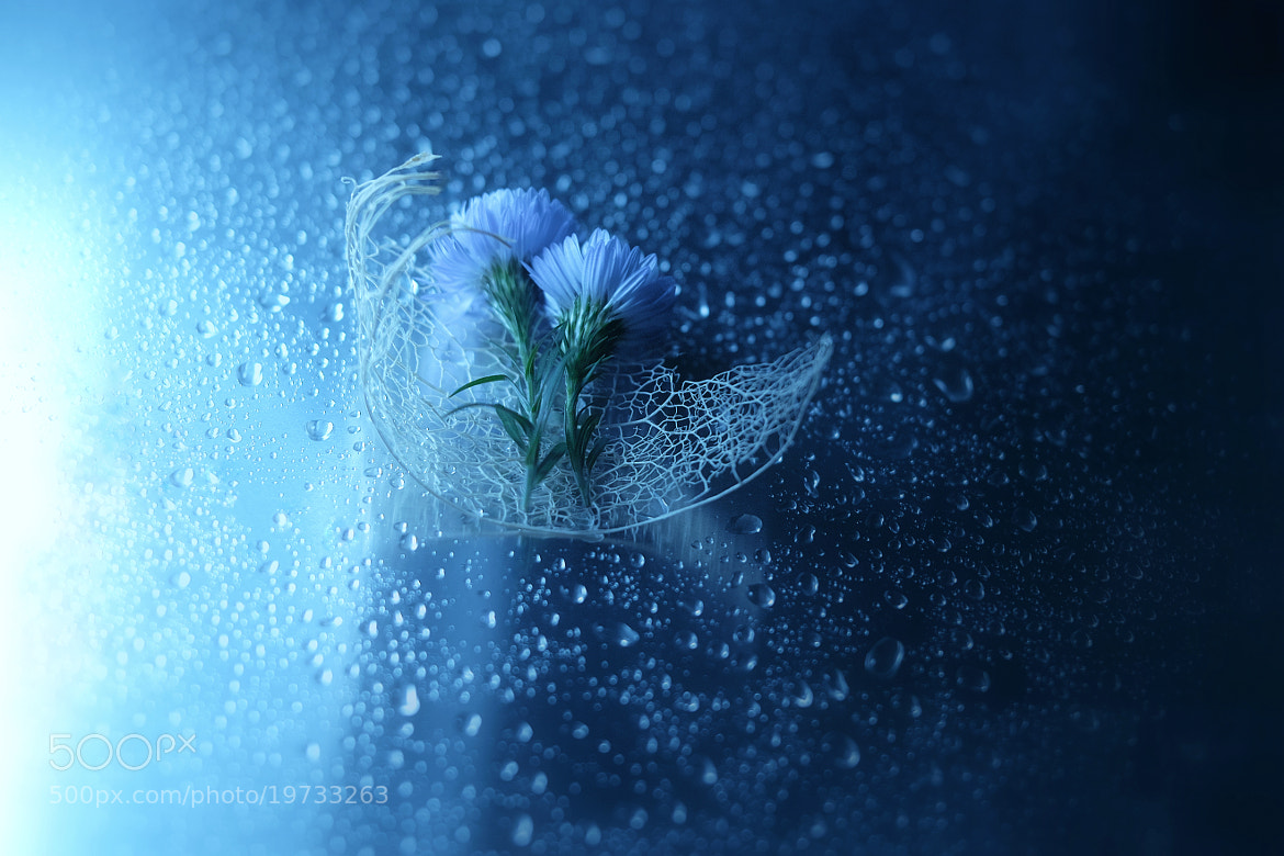 Photograph  Into the dream by Lafugue Logos   on 500px