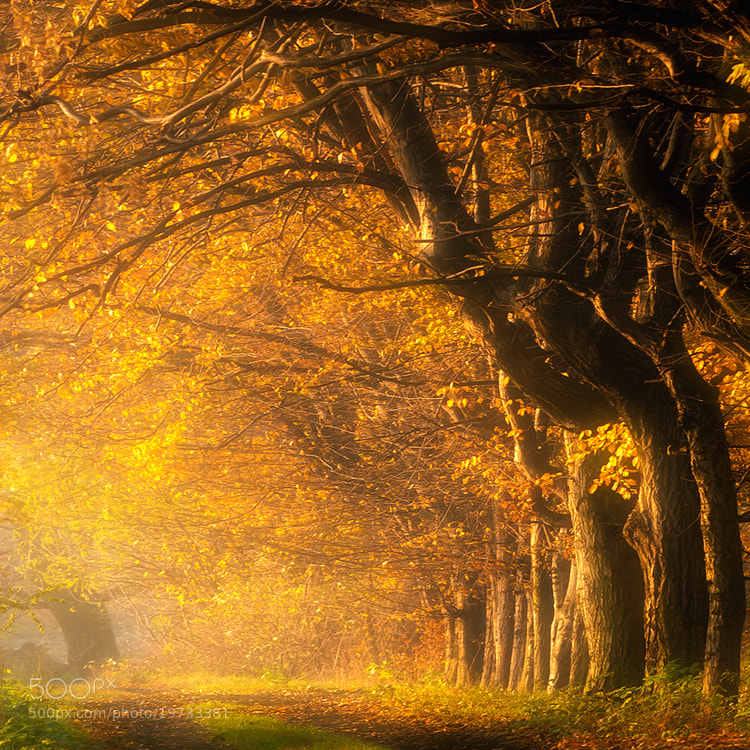 Photograph autumn alley by Piotr Krol on 500px