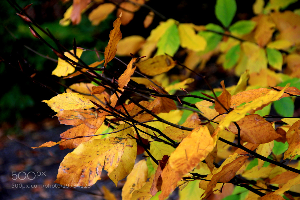 Photograph The Autumn Leaves by Atila Yumusakkaya on 500px