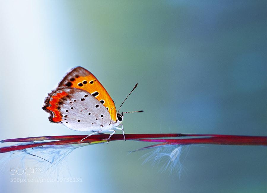 Butterfly by OKAWA โอ๋กะหว้า. somchai (som_chai_lugwa)) on 500px.com