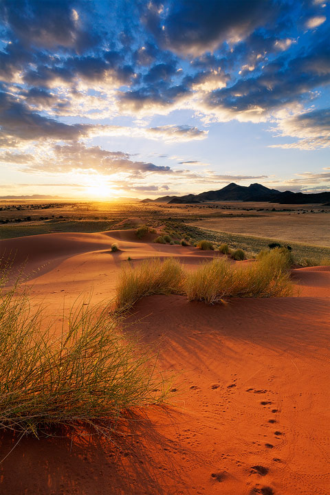Photograph Nocturnal Dune Dwellers by Hougaard Malan on 500px