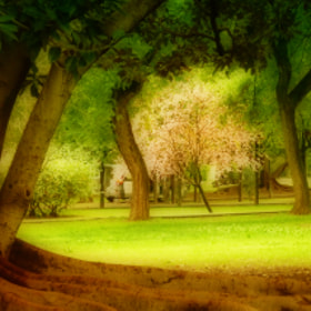Parque by Lola Camacho (lolinac)) on 500px.com