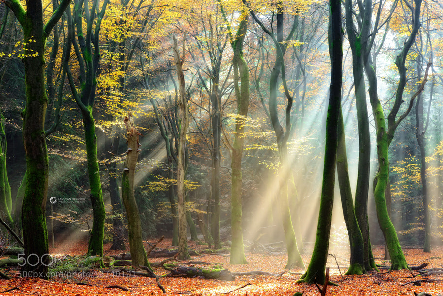 Photograph Basking by Lars van de Goor on 500px