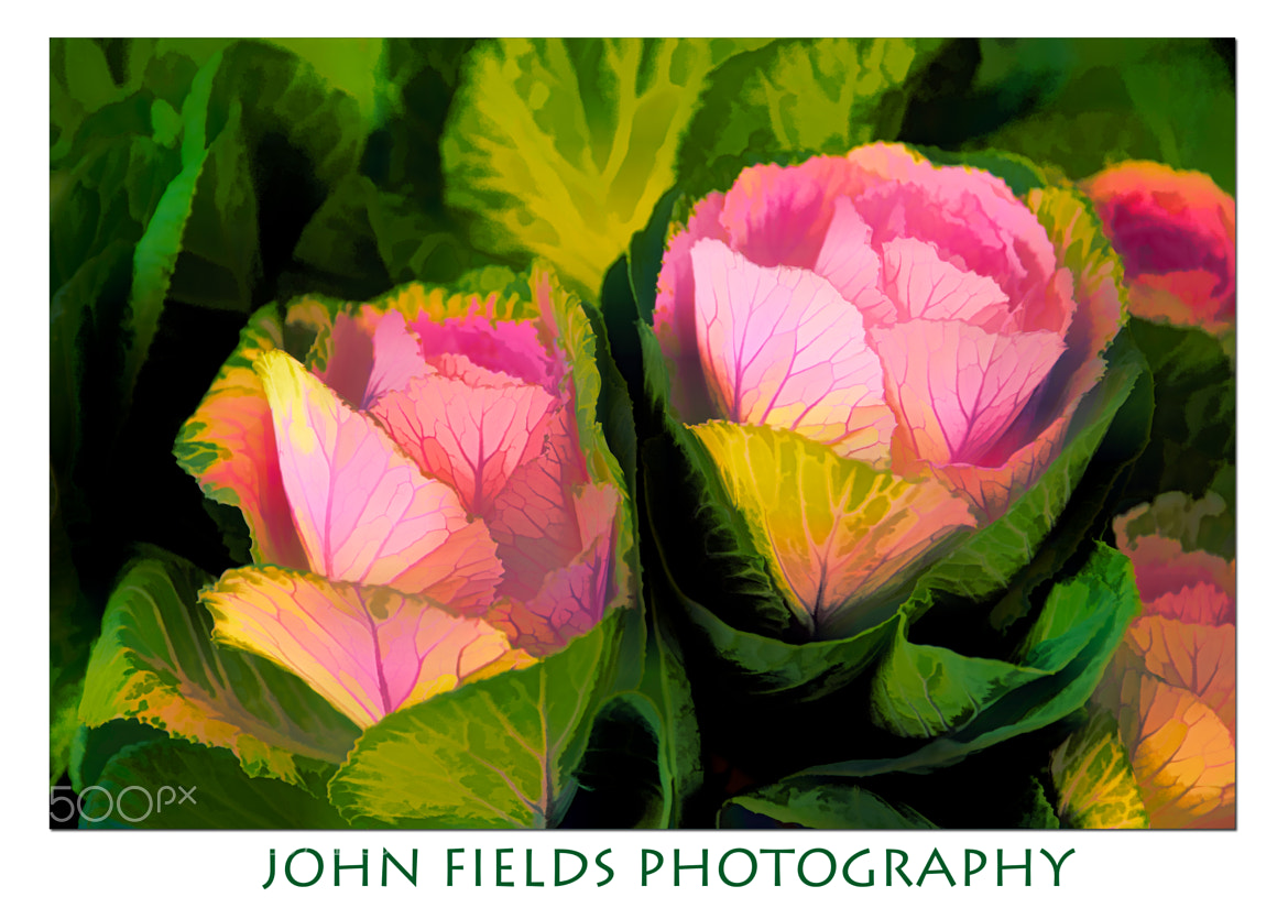 Photograph Two flowers from by John Fields on 500px