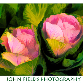 Two flowers from yesterday by John  Fields (JohnFields2012)) on 500px.com