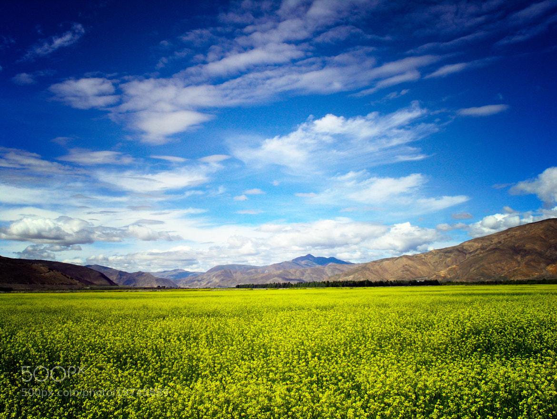 Photograph Sesame fields by Luca Febbraio on 500px