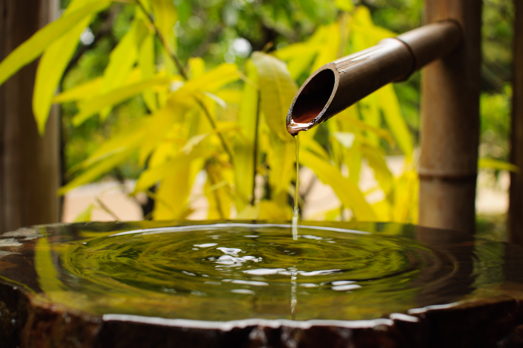 Photograph Bamboo water service by Naoyoshi Tamura on 500px