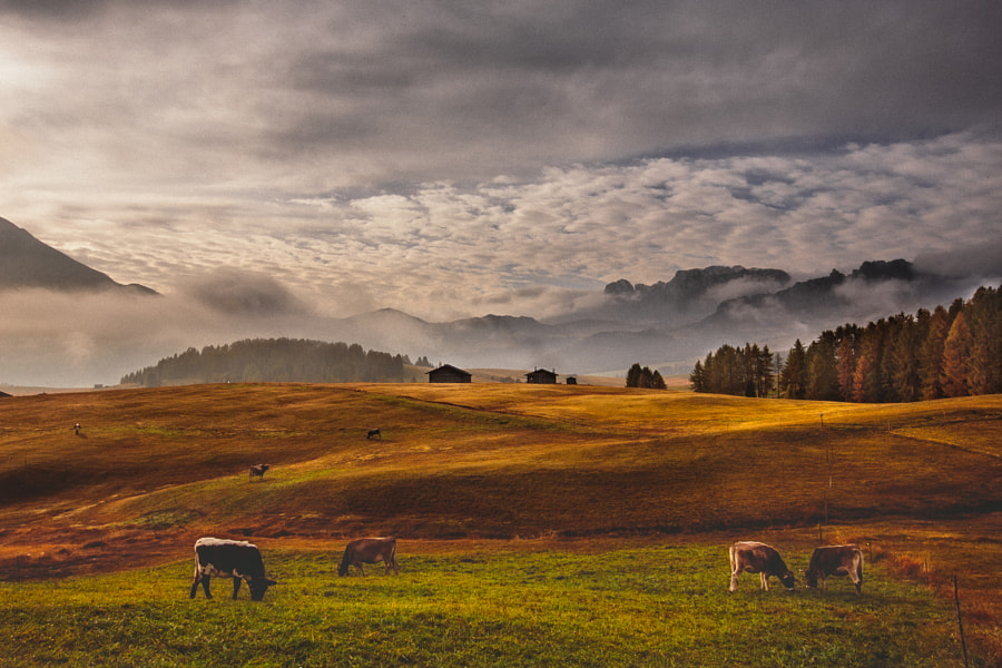 Dolomites - Cows & Layers