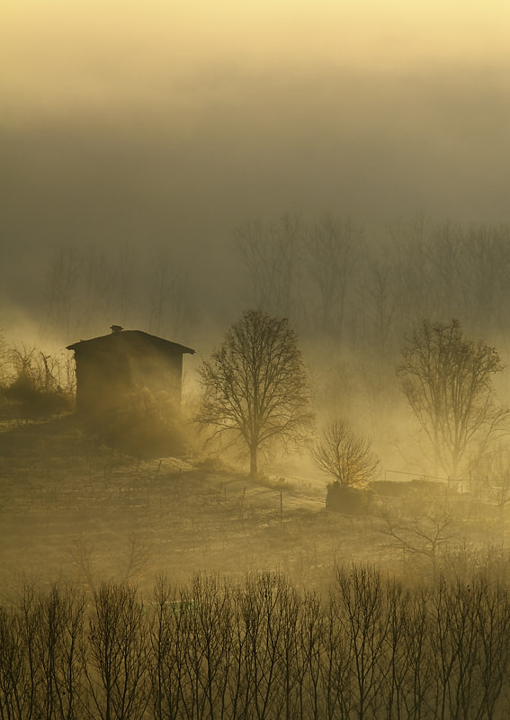 Photograph foggy  by Marco Barone on 500px