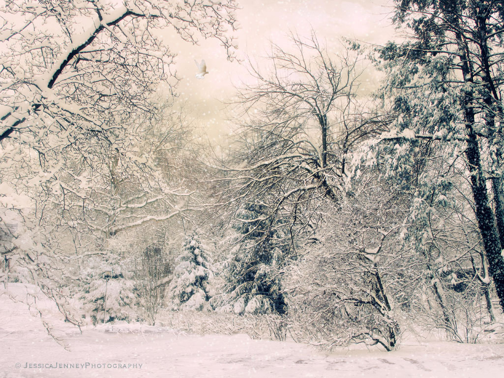 Photograph Snow White by Jessica Jenney on 500px
