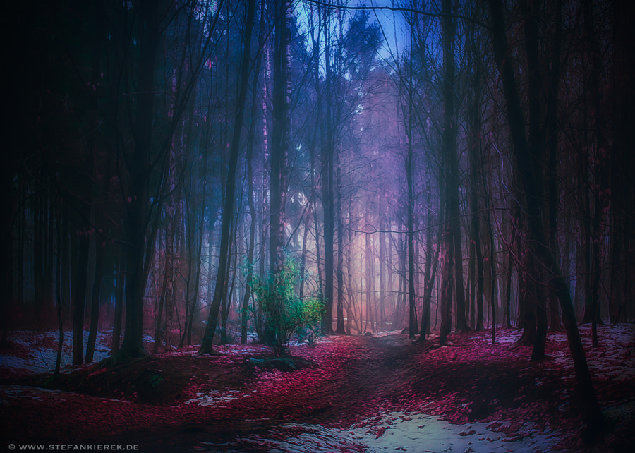 Cold forest II