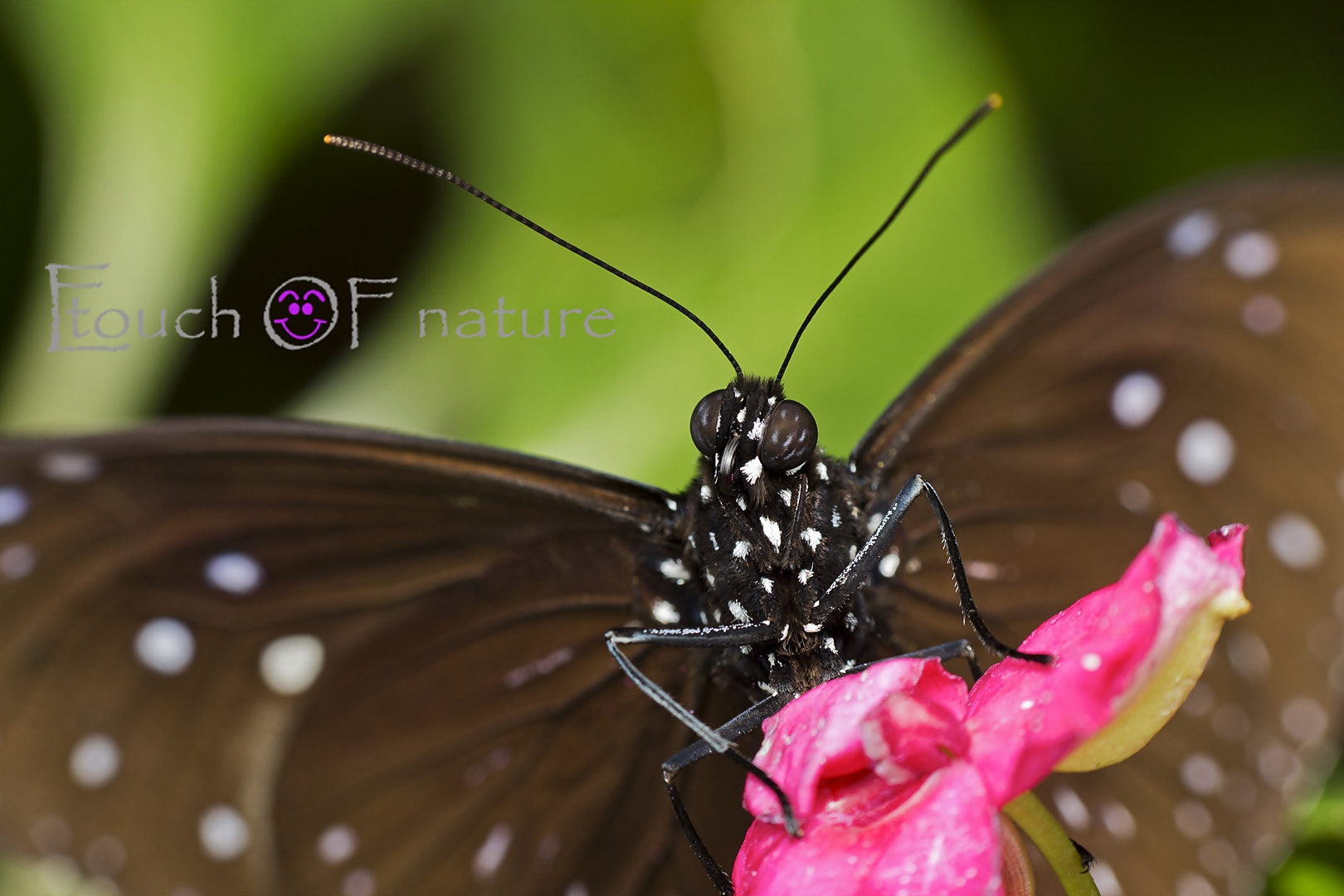 Photograph Butterfly by Esazyla Esa on 500px