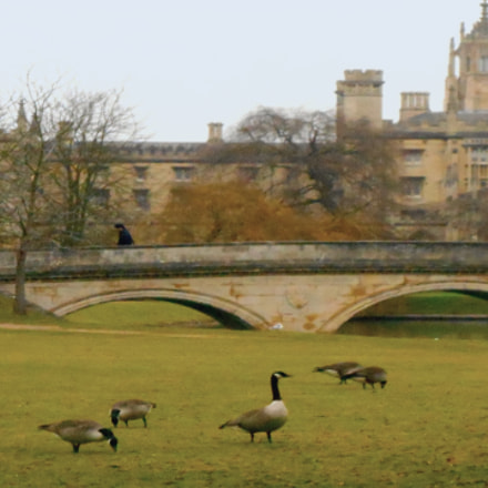 Geese and St John's, Nikon COOLPIX S3400