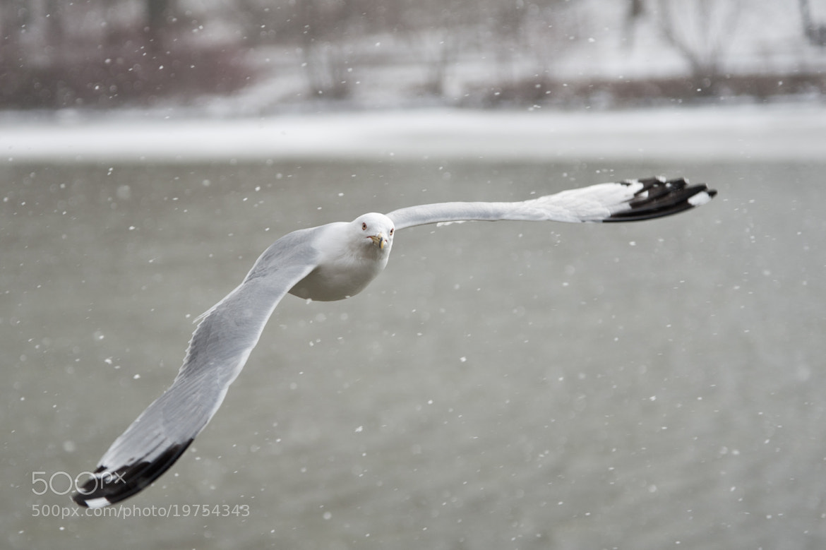 Photograph Gliding through the Snow by Justin Lo on 500px