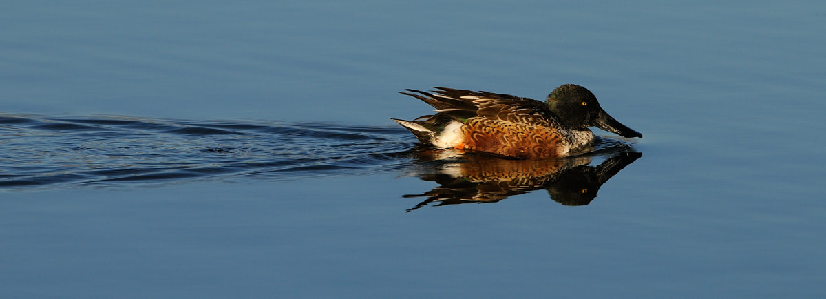 Photograph Reflection by Harry  Eggens on 500px
