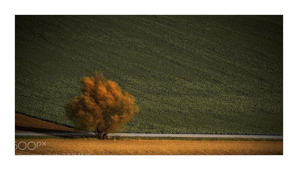 Photograph Rotschopf by Herbert_S on 500px