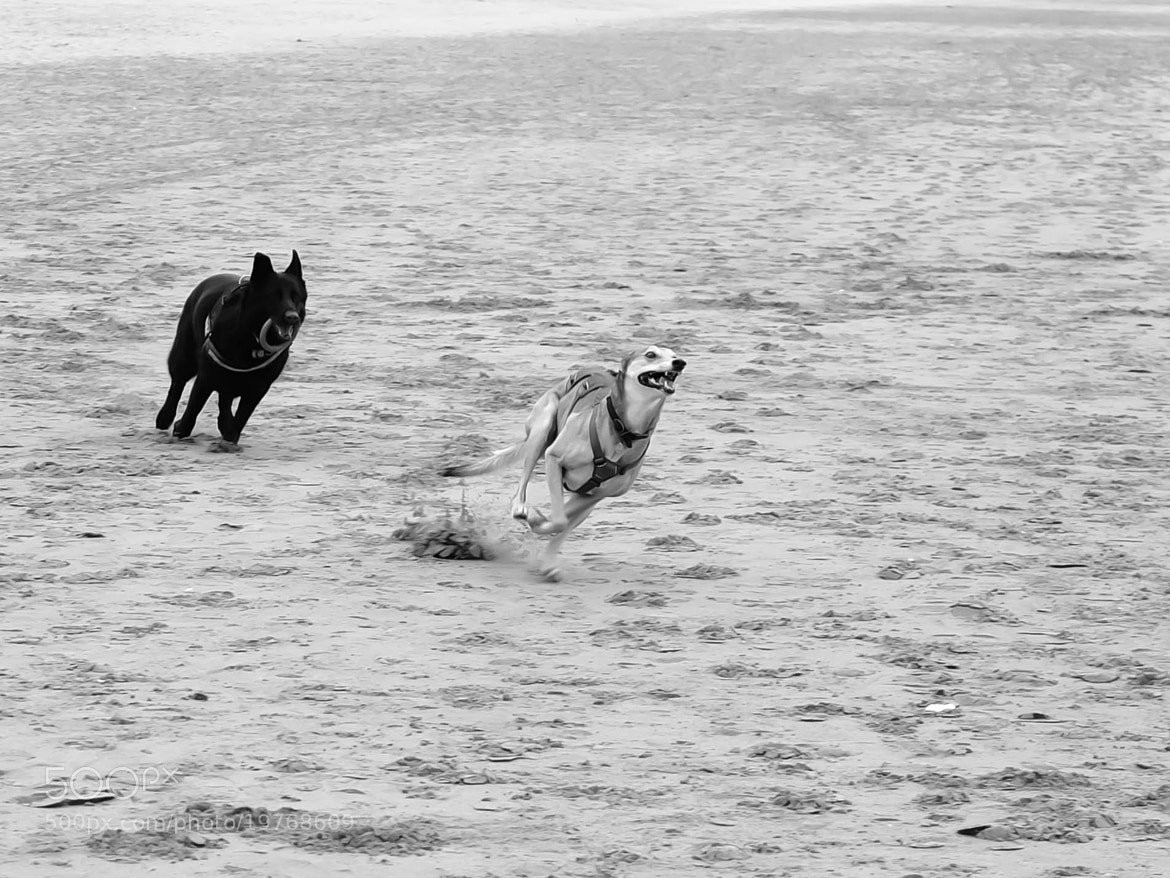 Photograph Hounds of Woolacombe Bay. by Graham Smith on 500px