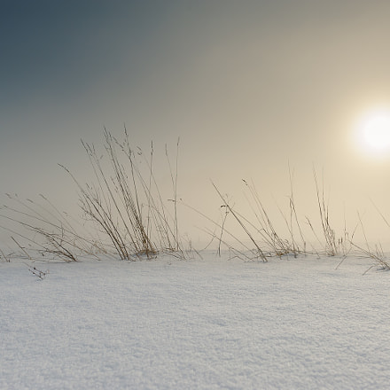 Grassfield covered by snow, Nikon D700, Sigma 24mm F1.8 EX DG Aspherical Macro