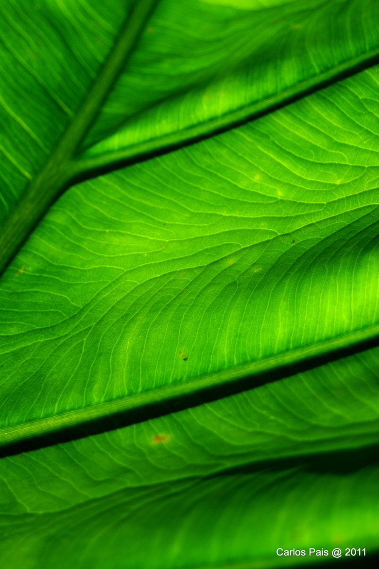 Photograph Green by Carlos Pais on 500px