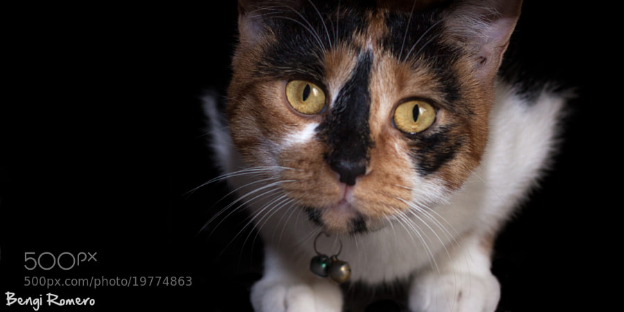 Tanit's eyes by Bengi Romero (masqluz)) on 500px.com