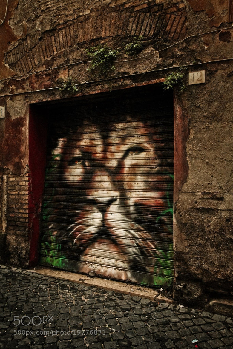 Photograph Lion Door by Sheldon Steere on 500px