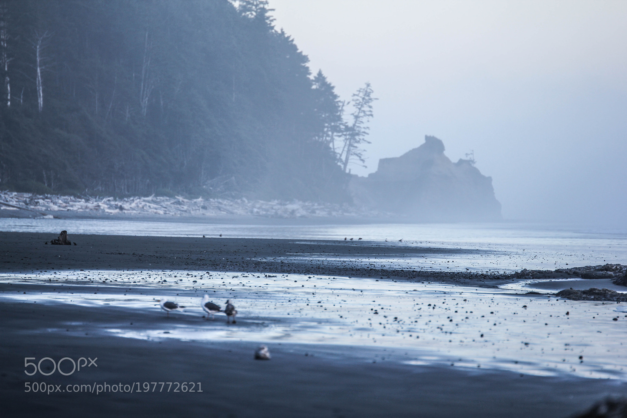 Cannon Beach marinated in blue