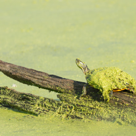 Camouflage Turtle, Canon EOS REBEL T3, Canon EF 100-400mm f/4.5-5.6L IS