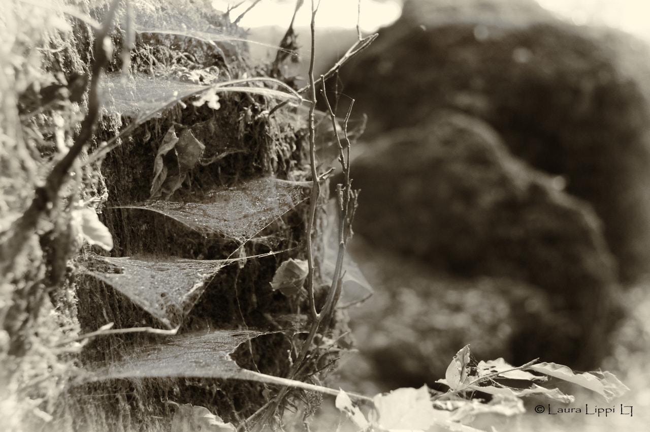 Photograph Spider web by Laura Lippi on 500px