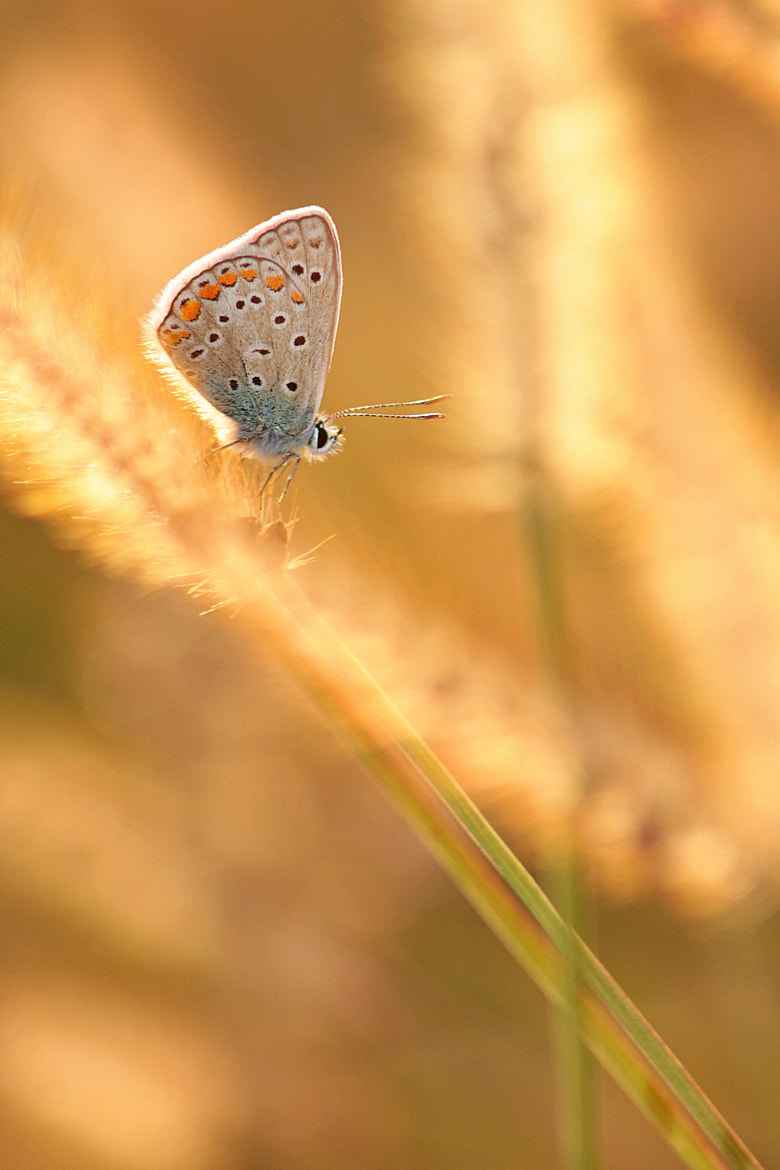 Photograph blue beauty in gold by Andreea Redacaju on 500px