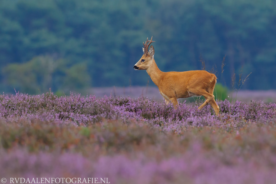 Photograph Beautiful colors by Remco van Daalen on 500px