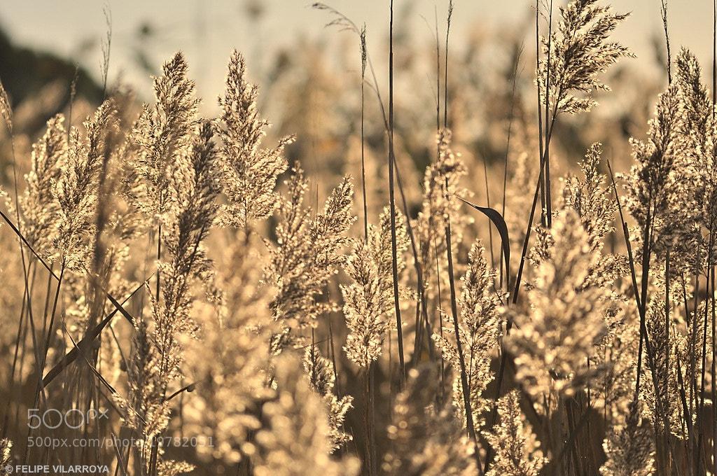 Photograph Luz de otoño by Felipe  vilarroya on 500px