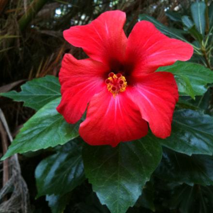 () Flower macro