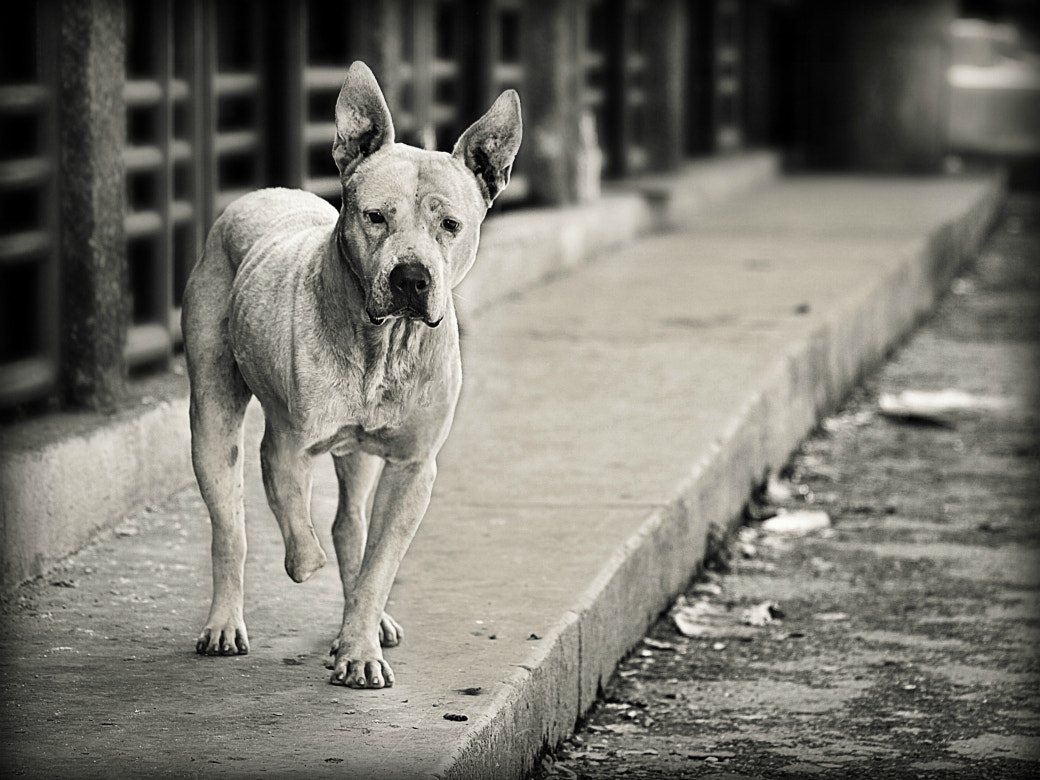 Photograph Street dog by Diana  Duque  on 500px