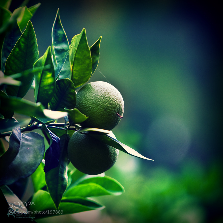 Photograph citrus plants by Katerina Karmanovskaya on 500px