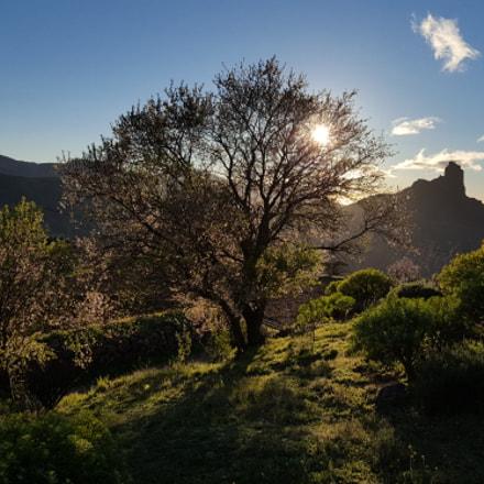 Almendros y Bentayga