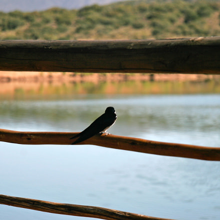 Bird on Fence, Canon EOS 20D, Canon EF-S 17-85mm f/4-5.6 IS USM