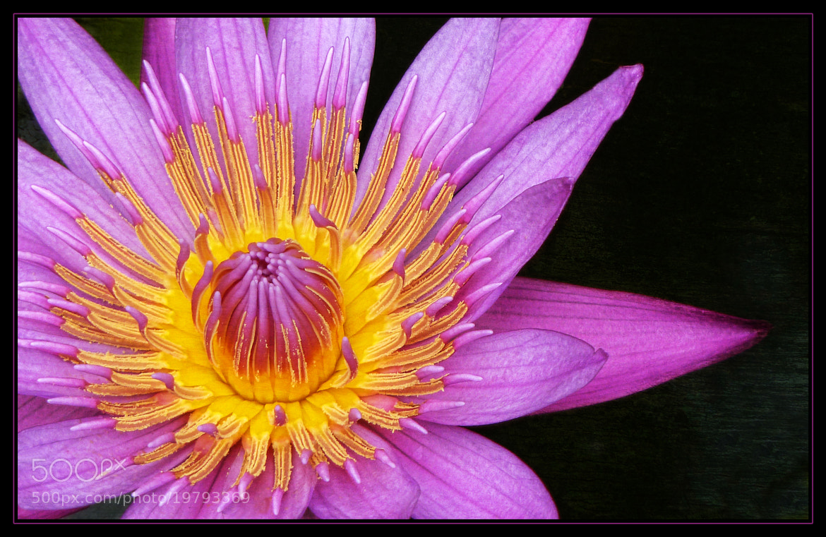 Photograph Fragile Beauty by Kim Andelkovic on 500px