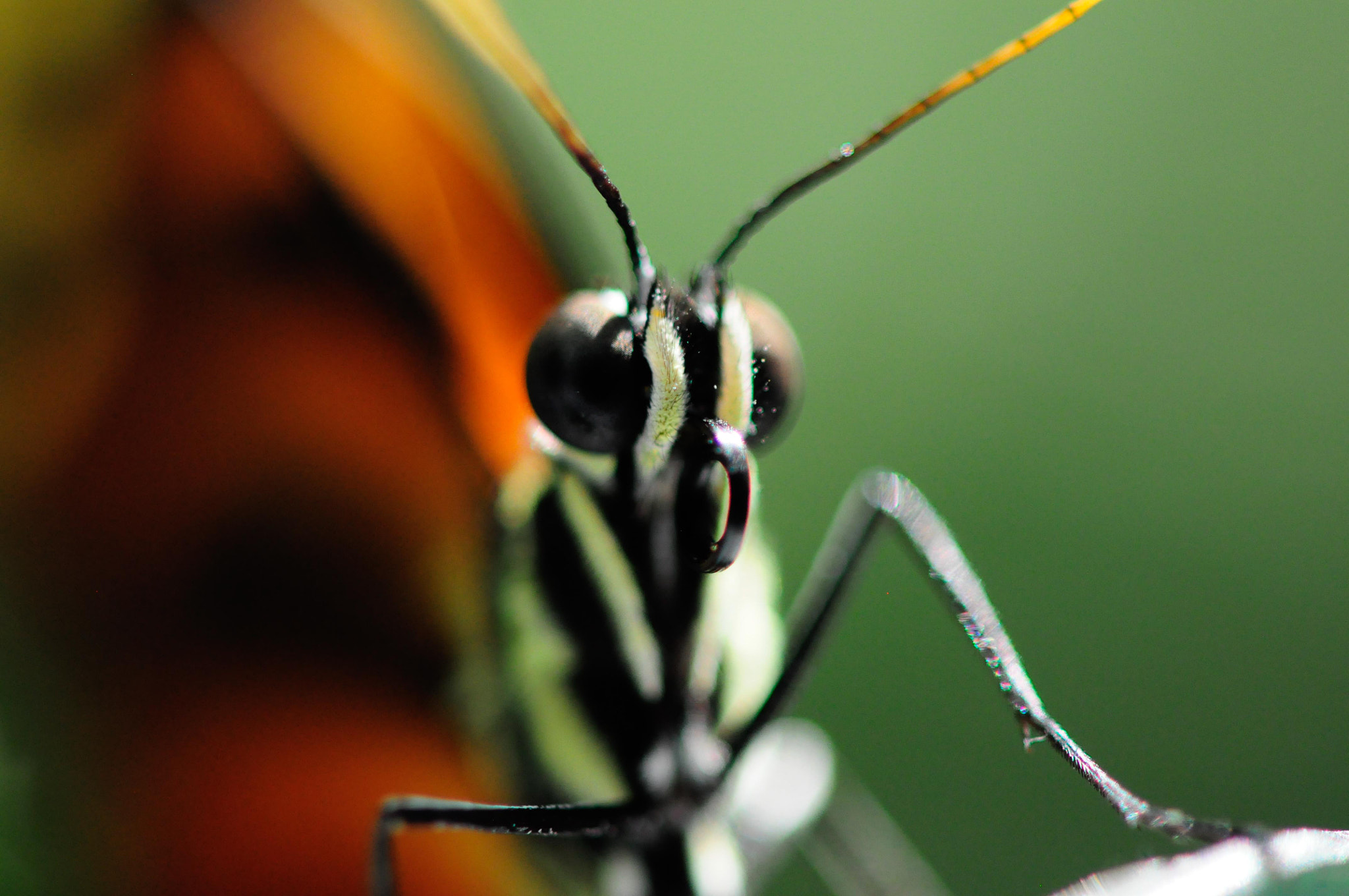 Photograph Butterfly by N Simpson on 500px