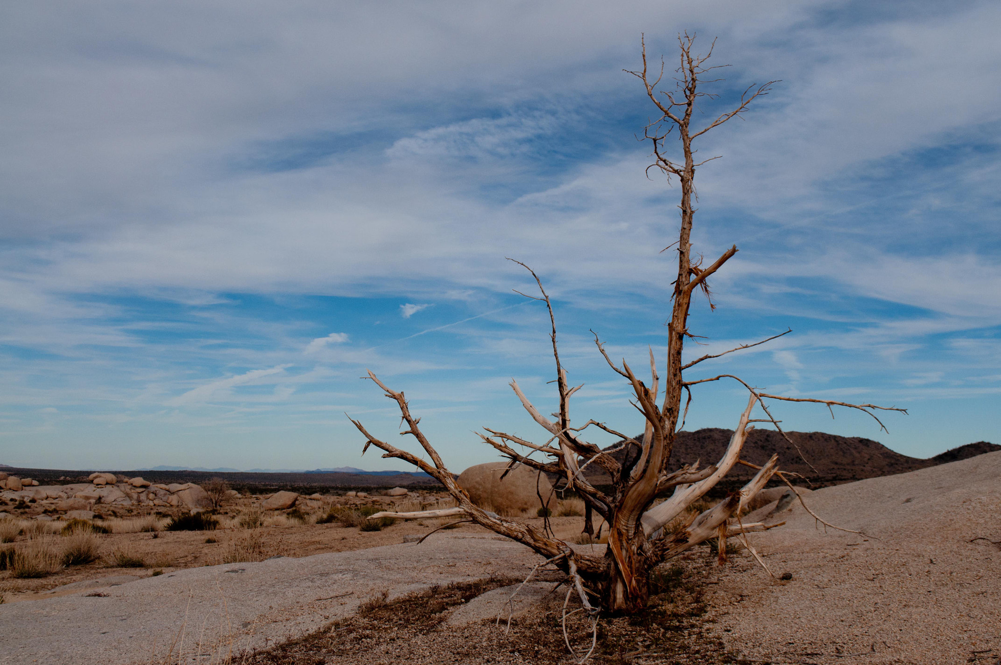 Photograph Ghostly Tree, Mojave Desert by N Simpson on 500px