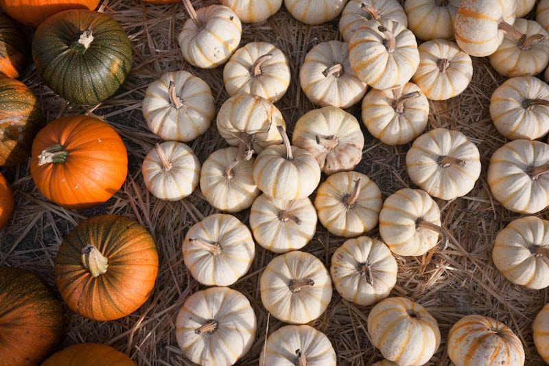 Photograph Pumpkins at Half Moon Bay by Glen Johnson on 500px