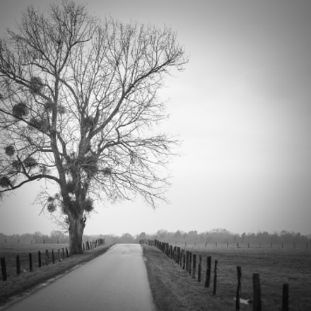 A poor solitary tree, Nikon D300S, Sigma 28-105mm F2.8-4 Aspherical
