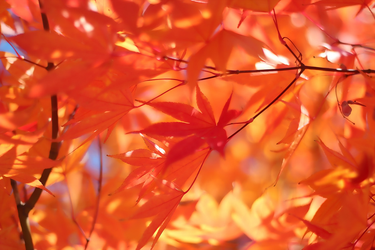 Photograph Autumn color by TY Kim on 500px