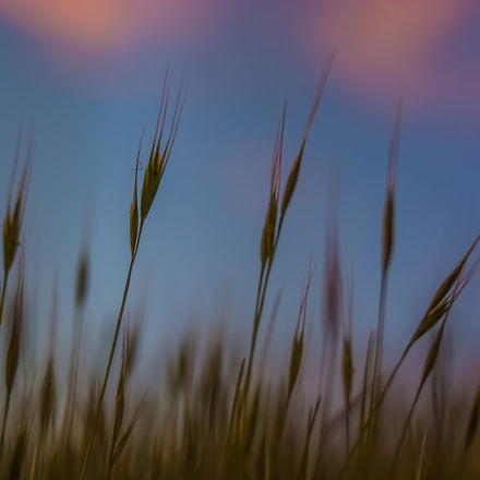 grass, Nikon D7100, Sigma 28-80mm F3.5-5.6 Mini Zoom Macro II Aspherical
