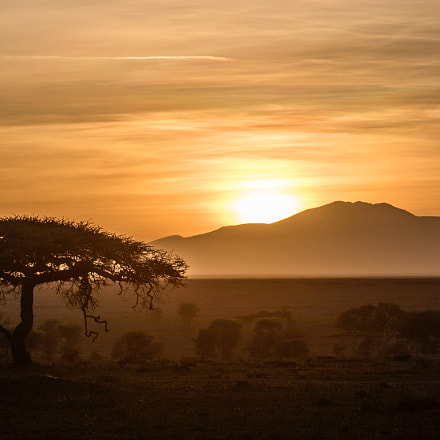 Sunrise-Serengeti, Tanzania, Canon EOS 5D MARK IV, Canon EF 200-400mm f/4L IS USM