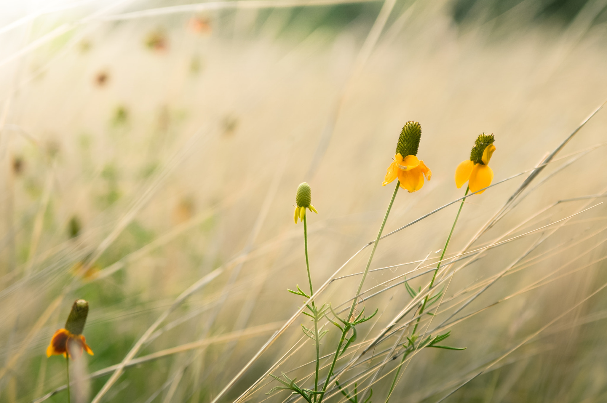 Photograph Yellow Friends by Bill Wilson on 500px
