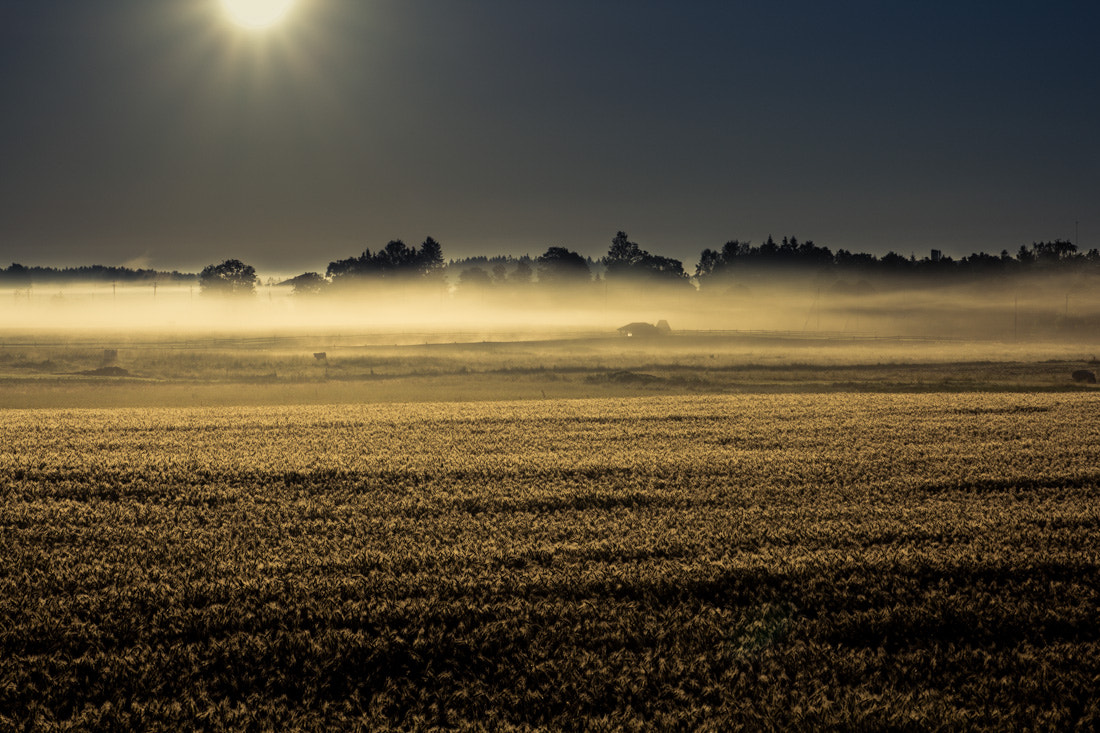 Photograph Field of rye by Mindaugas Ma on 500px