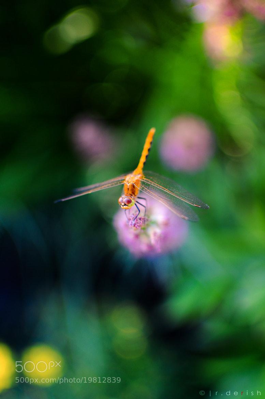 Photograph Auriaco II by Ryan Derish on 500px