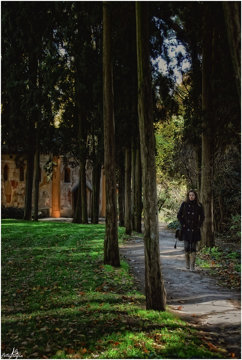 Photograph The path of the cypresses by Manuel Lancha on 500px