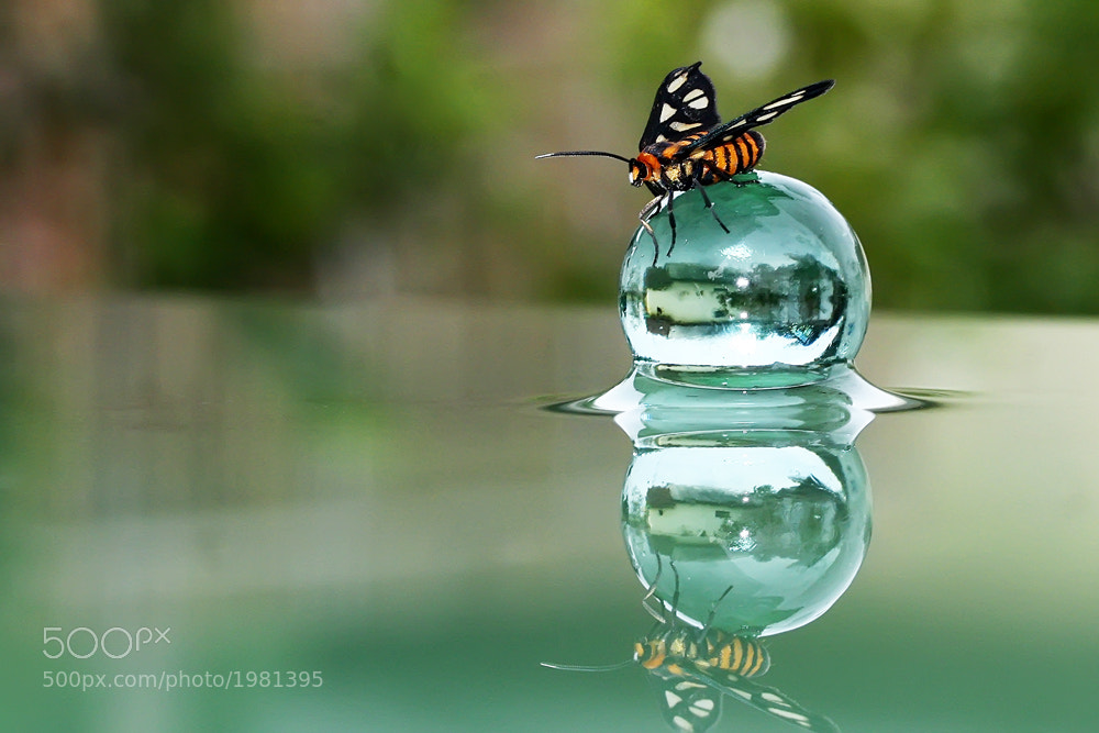 Photograph Butterflection by teguh santosa on 500px