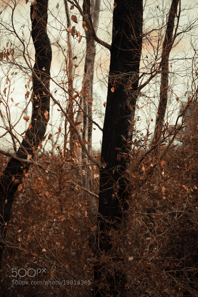 Photograph Warm Trees by Samantha Panciera on 500px